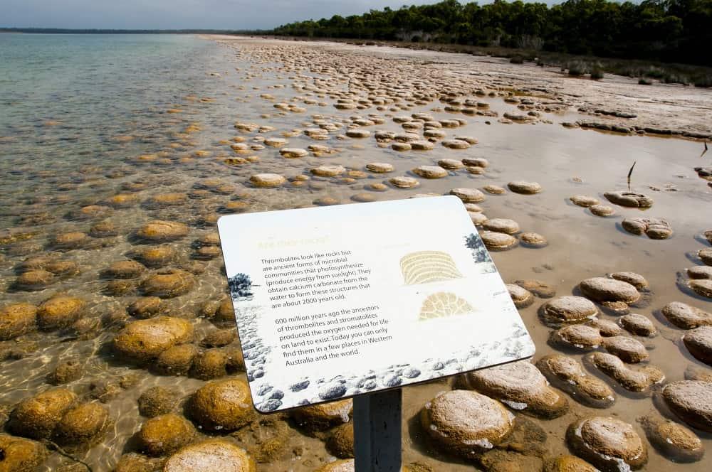 Lake Clifton Thrombolites