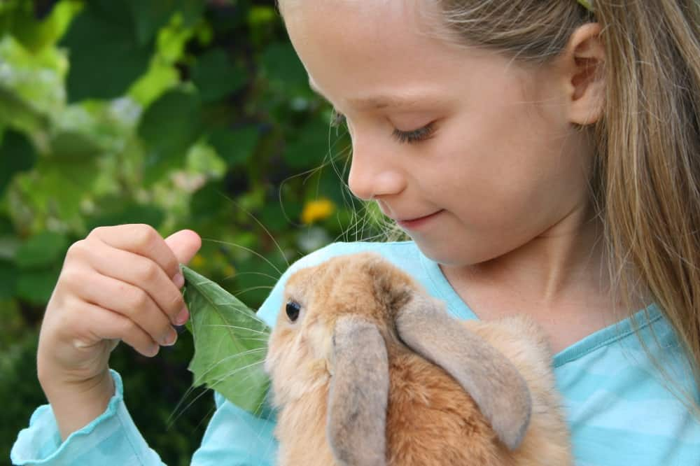 Vacation care programs with animals